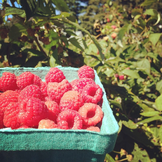 #raspberrypicking season!