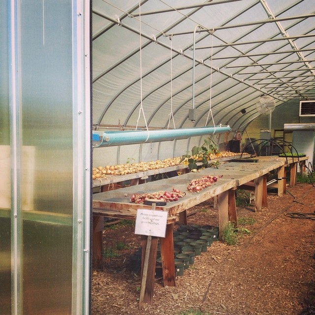 #farmseason #withfriends #greenhouse #lovelyweather