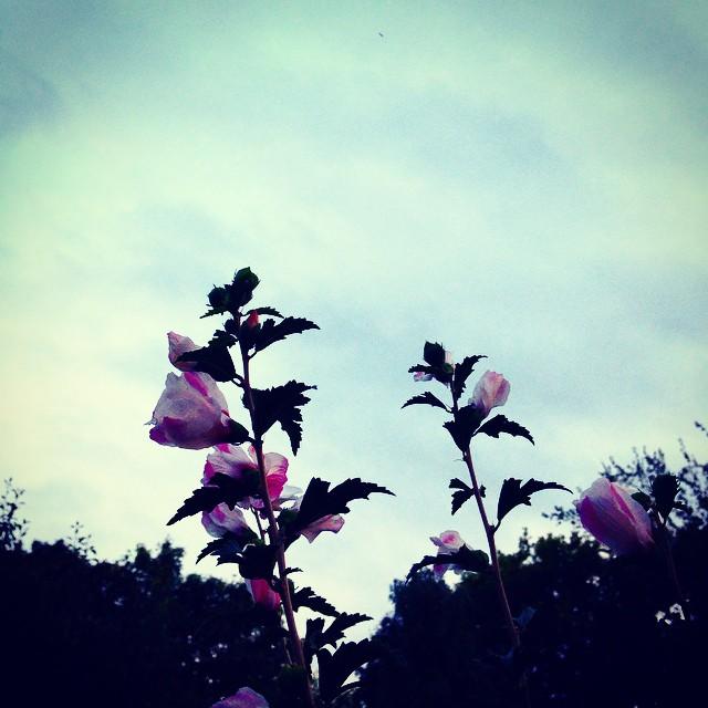 #waltham #lastflowers #goodbye summer
