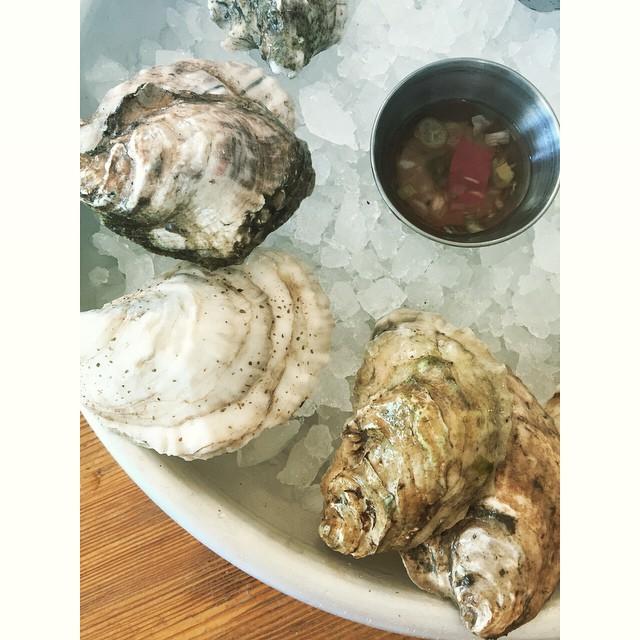maine oysters #pokecreek