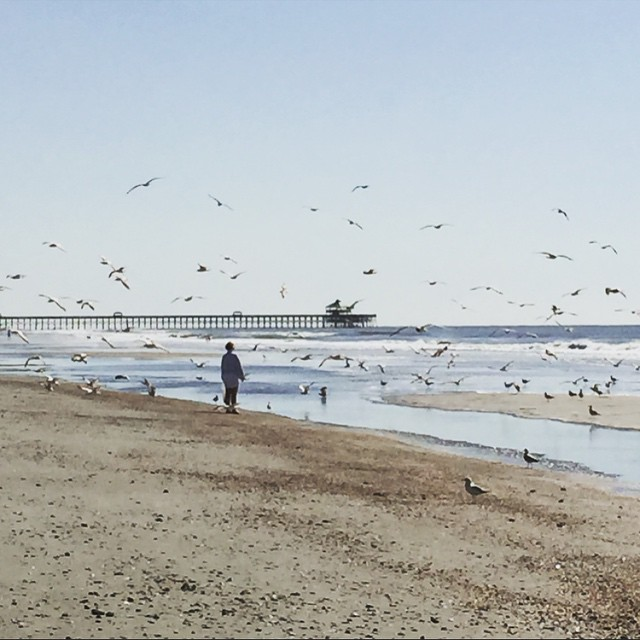 haven't seen the birds in months... now I know exactly where they've been #follybeach