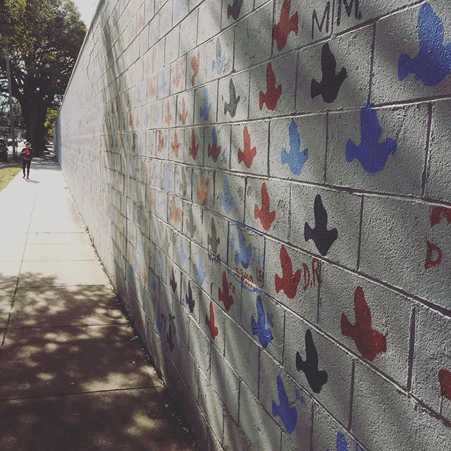 first time I've visited this wall - hundreds of doves painted by the public in response to hate #gilschuler #charlestonstrong #lovenothatemakesamericagreat